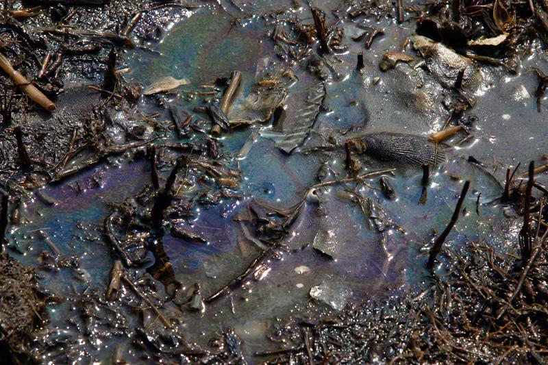 Gulf Oil Spill Still A Crisis Reef Rescue Coral Reef Blog