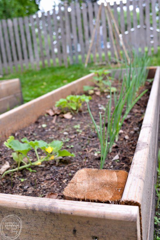 Soil Raised Garden Planter