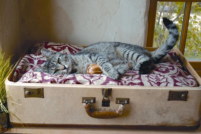 Casa para um gatinho de uma velha mala