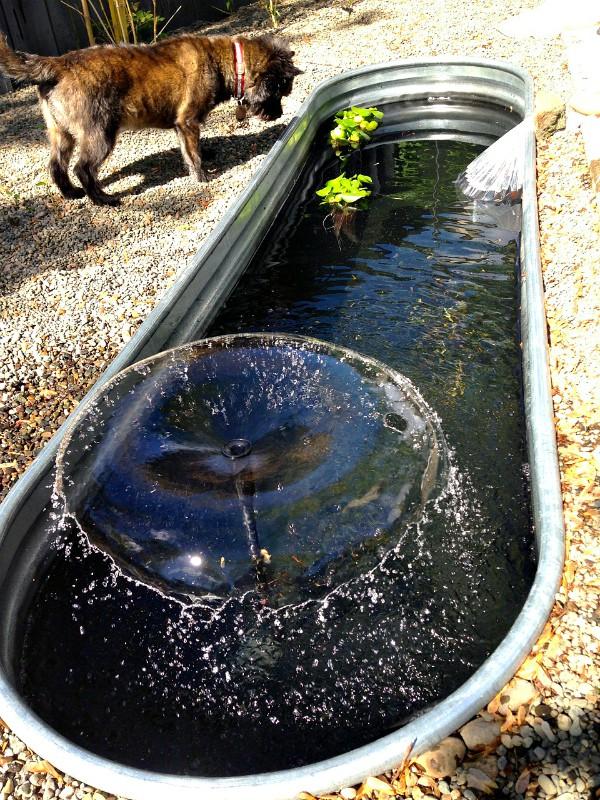 Pond Plants Large Plastic