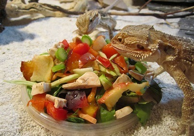 Want to Know How Often to Feed a Bearded Dragon? Here's ...