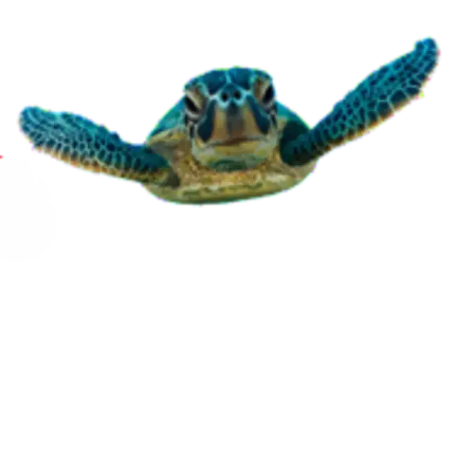 Transparent Baby Turtle Backround