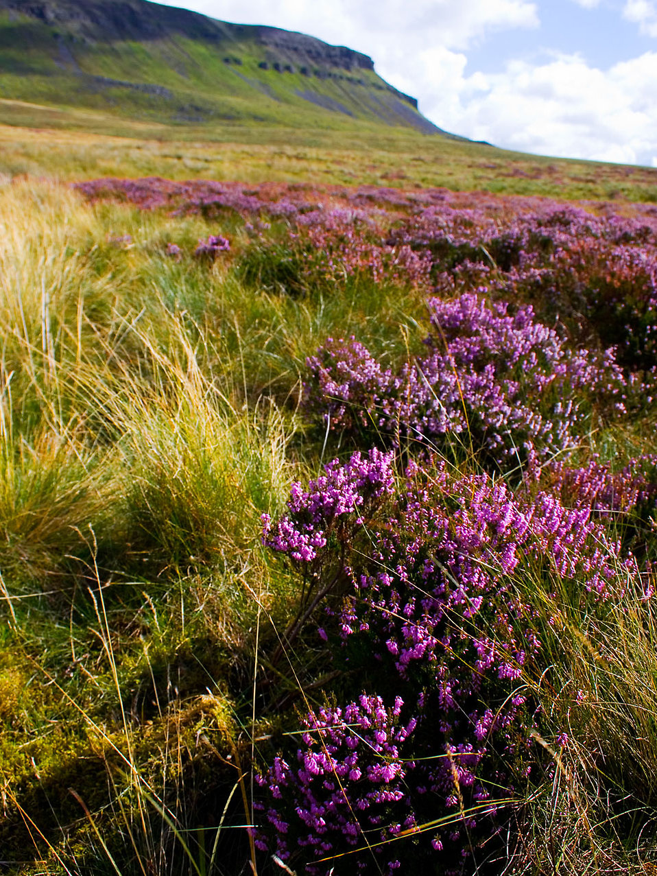 Landscape Flowers Free Stock Photo A Field With Purple