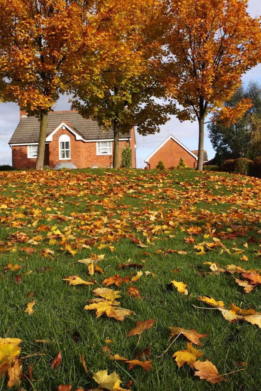 Autumn Landscape Free Stock Photo A House Surrounded