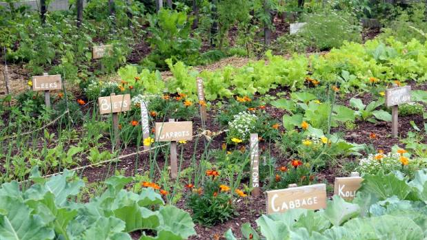 Safe Containers Growing Vegetables