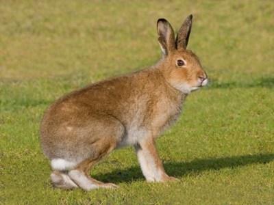 Irish wildlife | Natural History