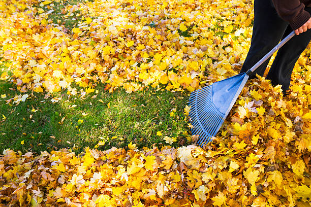 Why Rake Leaves Lawn