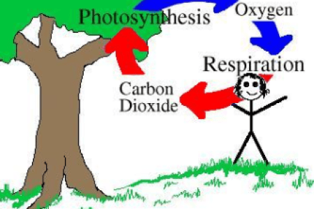 Carbon and oxygen cycle diagram full hd pictures 4k ultra full the carbon cycle oxygen cycle diagram biology tutorvista com oxygen cycle carbon dioxide oxygen cycle smore newsletters n a healthy environment the level of ccuart Image collections
