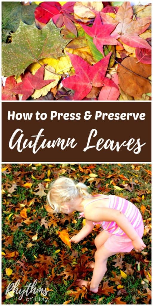 Easy Way Collect Leaves