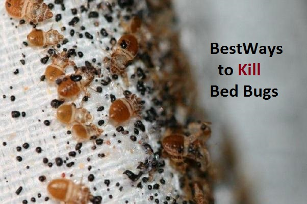 How To Remove Bed Bugs Naturally