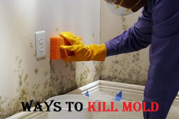 How To Kill Mold