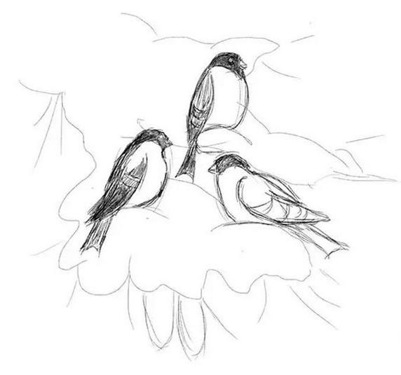 Bullfinch رسم بقلم رصاص، وكيفية رسم فئة رئيسية على الفرع + الصورة 4