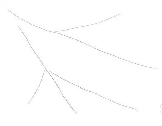একটি পেন্সিল দিয়ে অঙ্কন bullfinch, শাখা উপর একটি মাস্টার ক্লাস আঁকা কিভাবে + ছবি 1