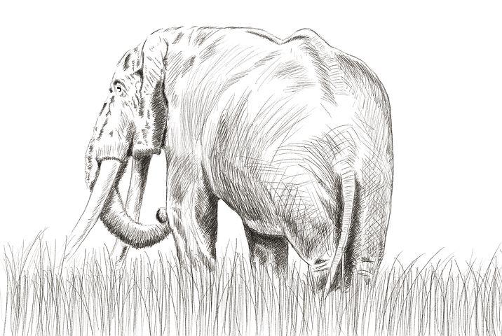 ดินสอภาพวาดช้างความคิดรูปถ่าย 4