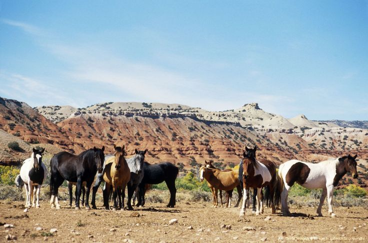 Le Meilleur Pin By Wade Salmons On Wild Horses Pinterest Ce Mois Ci