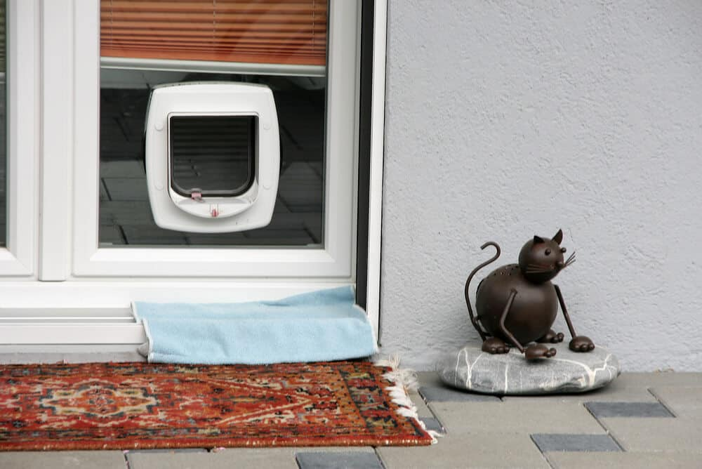 Le Meilleur Looking For Cat Fl*Ps Looking For A Dog Flap Dunstable Ce Mois Ci
