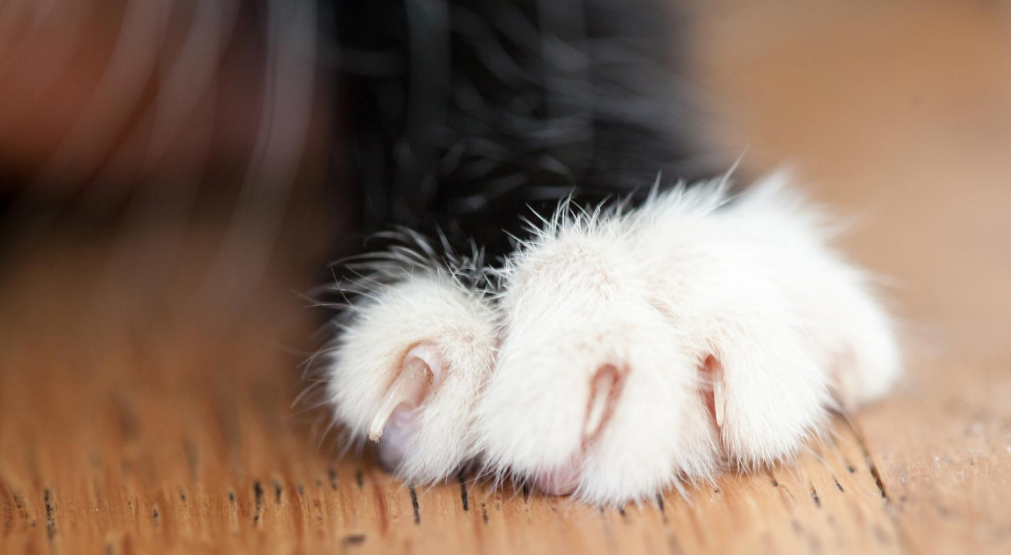 Le Meilleur Soft Paws Can Help Protect Doors And Walls From Cat Ce Mois Ci