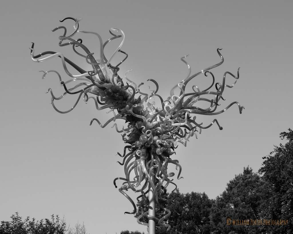 Le Meilleur Chihuly At The Dallas Arboretum William Porter Photography Ce Mois Ci