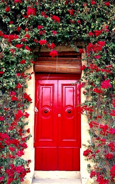 Le Meilleur Best 25 Red Roses Ideas On Pinterest Red Roses And Buy Ce Mois Ci