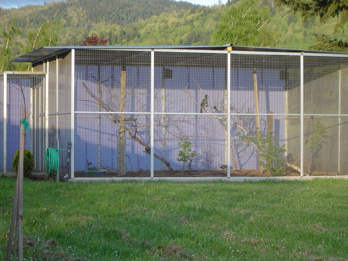 Le Meilleur 1000 Images About Aviaries And Enclosures On Pinterest Ce Mois Ci