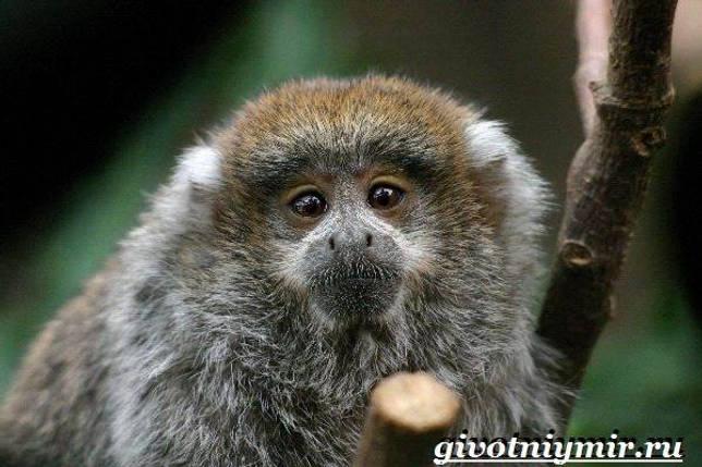 Eläimet Southern-America - Kuvaus-ja-Ominaisuudet - Animal-Etelä-America-9