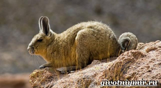 Eläimet Etelä-Amerikka-kuvaus - ja -ominaisuudet eläin Southern-America