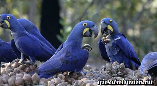 Eläimet Southern-America - Kuvaus-ja-Ominaisuudet - Animal-Etelä-Amerikka-26