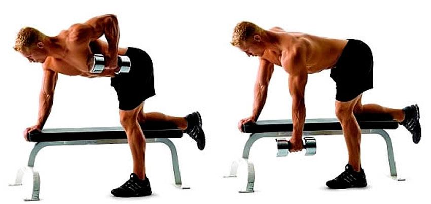 Functies van de breedste spieren van de achterkant