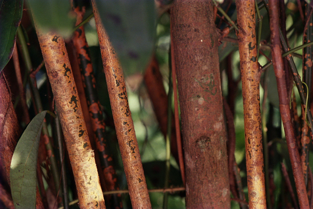 The Truth About Where Cinnamon Comes From   HuffPost
