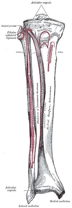 Greys Anatomy Inferior Skull