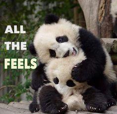 1000+ images about Pandas being Pandas on Pinterest ...