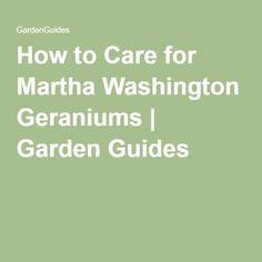 Geraniums, Washington and Yards on Pinterest