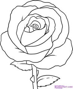 1000+ images about Draw a rose on Pinterest | Rose ...