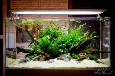 ISLAND SCAPE | aquarium | fish tank | aquascape ...