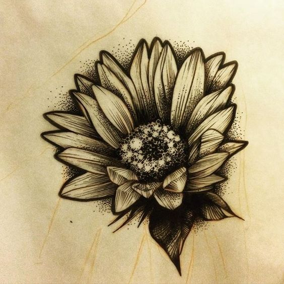 Sketch drawing, Sunflower flower and Sketches on Pinterest