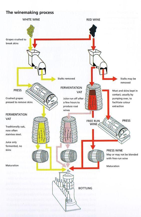 Wine Process White Making