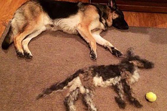 Brushing Hair Dog Owner
