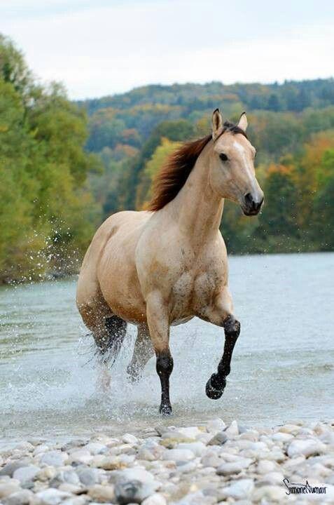 Wild Horses Fighting World Most Beautiful Black Breed Through
