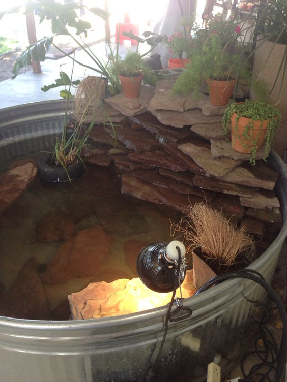 Where Get Fish Stock Pond