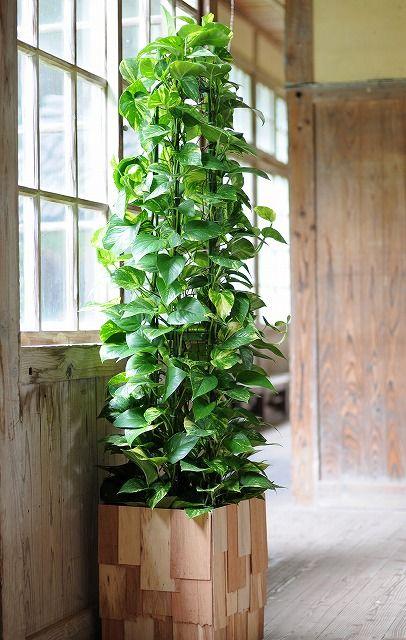 Large Cedar Planter