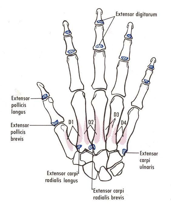 Tips Anterior Rays X