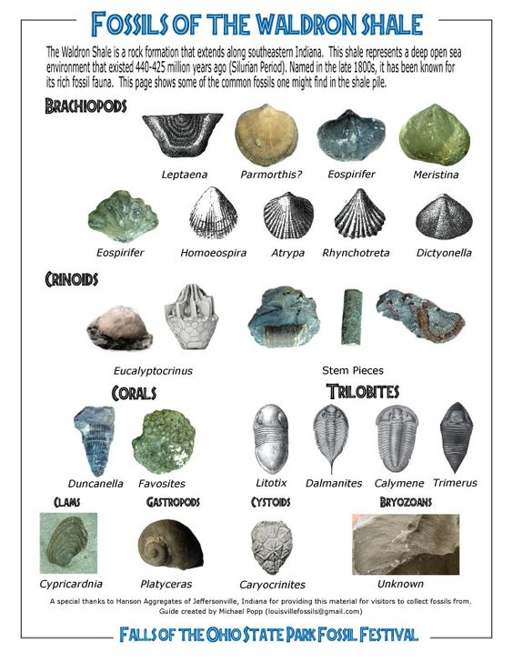 Texas Fossil Identification Chart