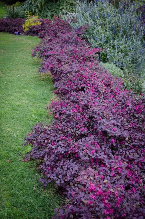 Small Flower Shrubs Beds