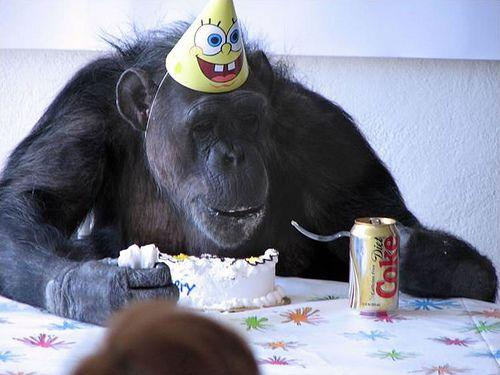 Belated Monkey Birthday