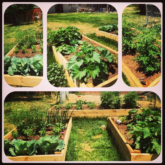 Raised Gardens Ideas