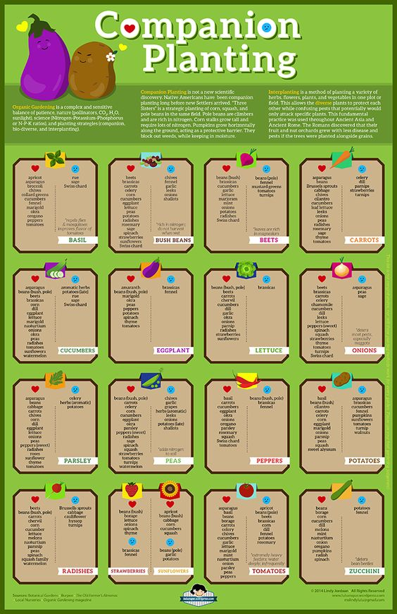 Fruit Companion Planting Chart