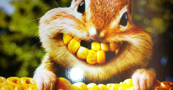 Chipmunk Corn Smile Teeth Are Terrific Pinterest