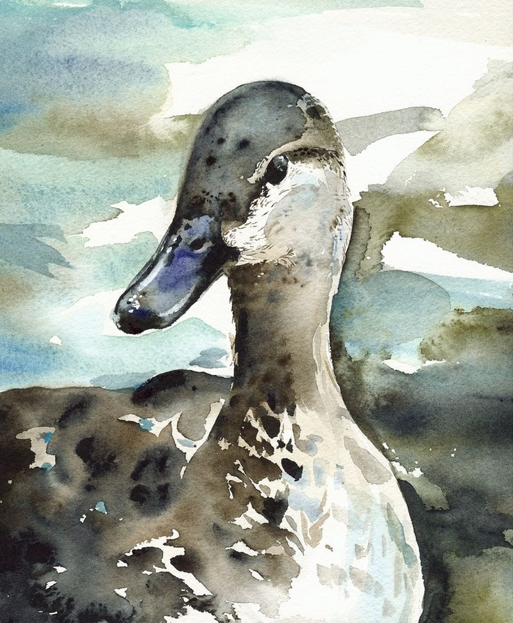 Duck Colors Mallard Painting