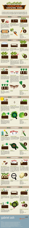 Starting Raised Vegetable Garden Scratch