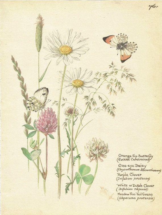 Botanical Prints Vintage Butterfly